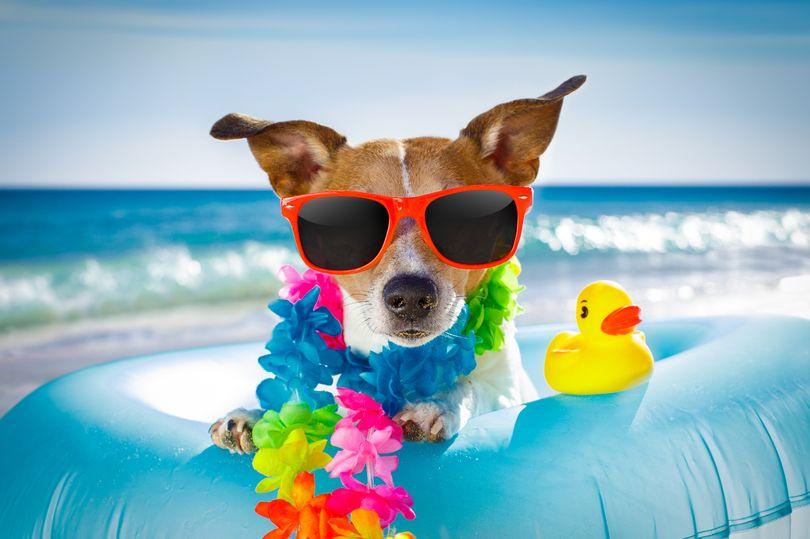 https: img.okeinfo.net content 2018 07 20 406 1924971 6-tips-penting-ajak-anjing-berlibur-ke-pantai-jangan-lupa-kantong-kosong-dk8wIvFTvs.jpg