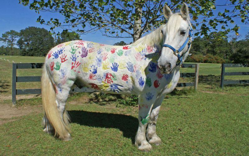 https: img.okeinfo.net content 2018 08 10 196 1934586 tren-melukis-di-badan-kuda-tanpa-sadar-ajarkan-anak-kejam-pada-binatang-dRltqsArNf.jpg