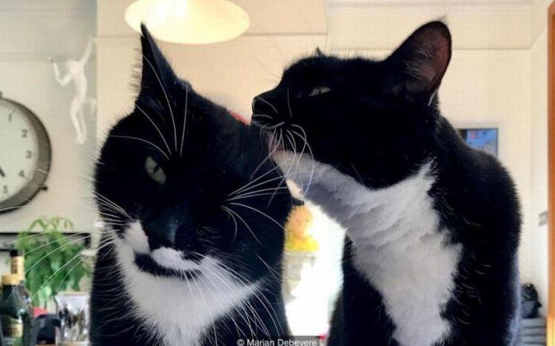 https: img.okeinfo.net content 2018 08 11 196 1935205 menelaah-penyebab-kucing-mendengkur-dj3TAOilZ3.jpg
