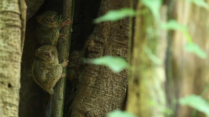 https: img.okeinfo.net content 2018 08 19 406 1938436 5-hewan-langka-di-dunia-ini-hanya-ada-di-indonesia-7ZJcXVghiV.jpg