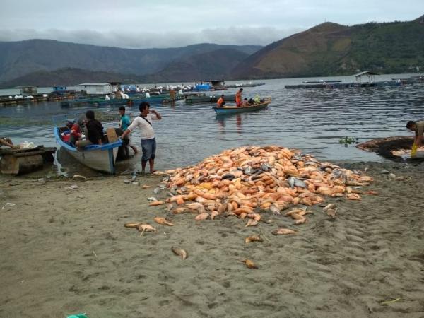 https: img.okeinfo.net content 2018 08 23 340 1940388 jutaan-ikan-di-danau-toba-mati-mendadak-penyebabnya-belum-diketahui-BB3wvBrJAw.jpg