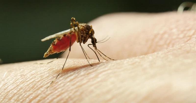 https: img.okeinfo.net content 2018 09 13 481 1950151 mengenal-bahaya-malaria-mix-penyakit-mematikan-yang-terjadi-di-papua-D9gsoehnv1.jpg