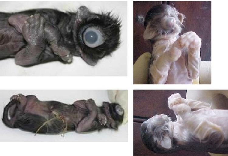 https: img.okeinfo.net content 2018 09 14 196 1950450 kumpulan-hewan-lahir-dengan-kondisi-langka-hanya-punya-satu-mata-KdWCLFBnvb.jpg