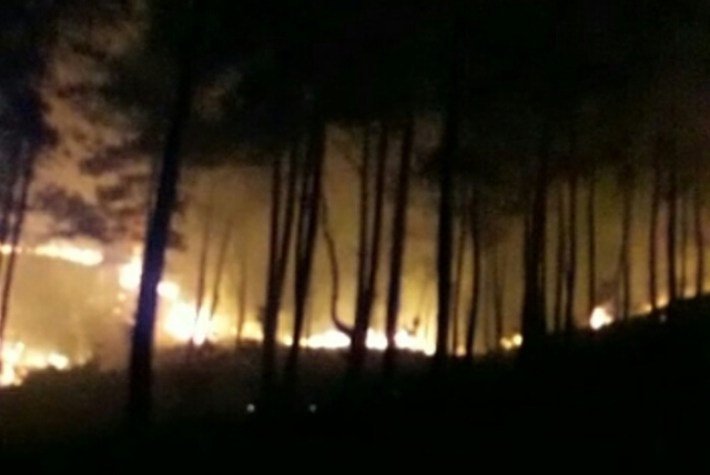 https: img.okeinfo.net content 2018 09 15 340 1950782 hutan-pinus-di-tana-toraja-terbakar-iMHTBDZM0X.jpg