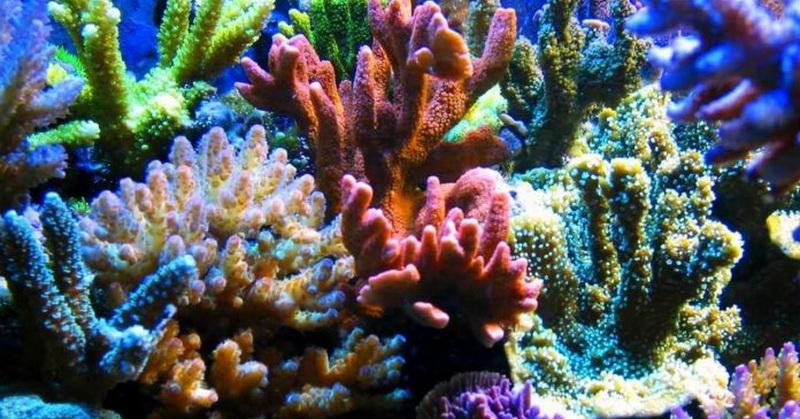 https: img.okeinfo.net content 2018 09 17 56 1951784 spesies-baru-terumbu-karang-untuk-obati-kanker-hmQzGQJTcd.jpg