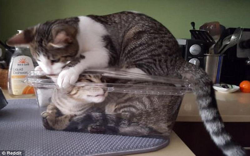 Nama Kucing Laki Laki Yang Bagus Menurut Islam 81021 Nama Untuk Kucing Comel Lucu Dan Unik