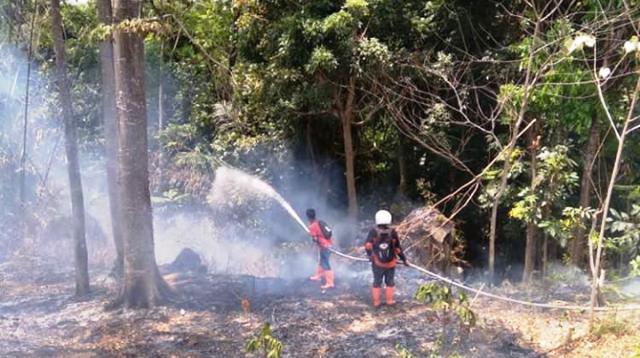 https: img.okeinfo.net content 2018 10 04 525 1959763 kebakaran-di-gunung-ciremai-meluas-hingga-300-hektare-nFhi4Ra0qS.png