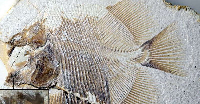 https: img.okeinfo.net content 2018 10 19 56 1966345 ditemukan-fosil-mirip-piranha-berusia-152-juta-tahun-ylcCmp3O2P.jpg