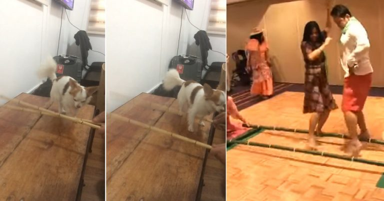 https: img.okeinfo.net content 2018 10 22 196 1967171 kenalkan-si-bullet-anjing-chihuahua-yang-pandai-menari-bambu-4plRDSkhWI.jpg