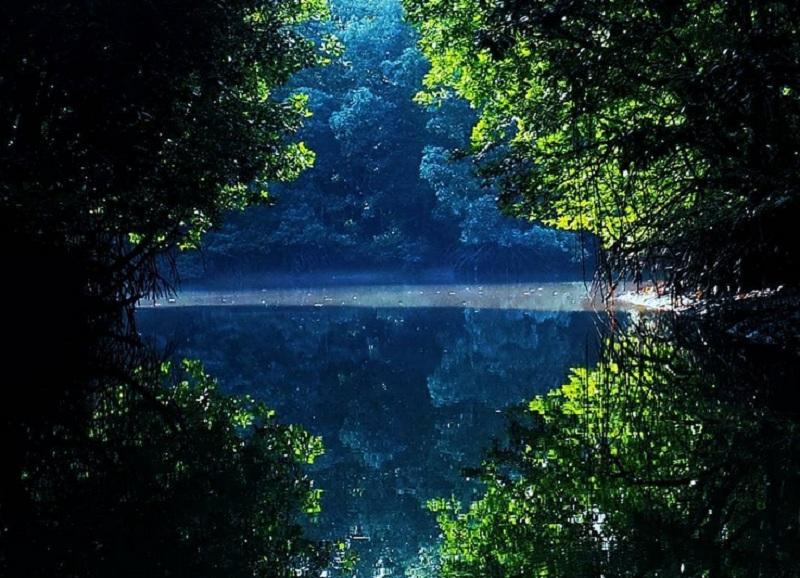 https: img.okeinfo.net content 2018 11 01 406 1972131 serunya-berpetualang-di-kalimantan-dari-keliling-mangrove-hingga-bertemu-buaya-PpKH1urwVj.jpg