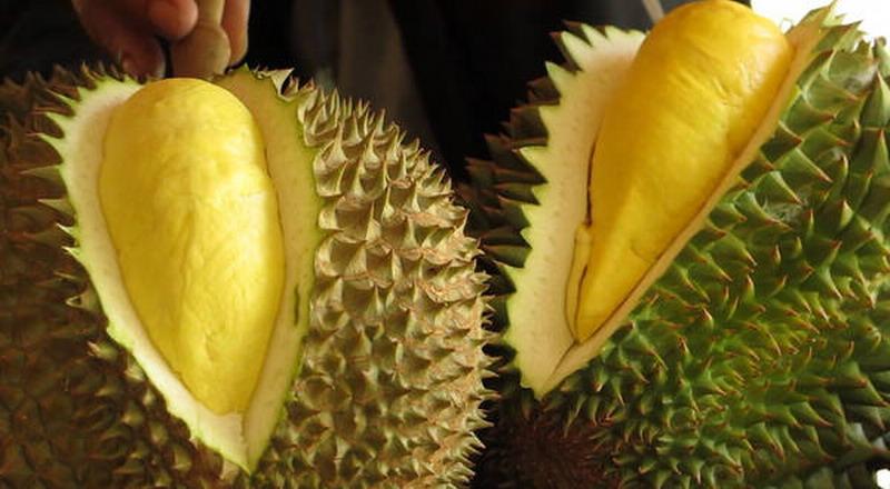 https: img.okeinfo.net content 2018 11 06 298 1974101 penis-banteng-sampai-durian-ada-di-museum-makanan-menjijikkan-xEuJFImkIz.jpg