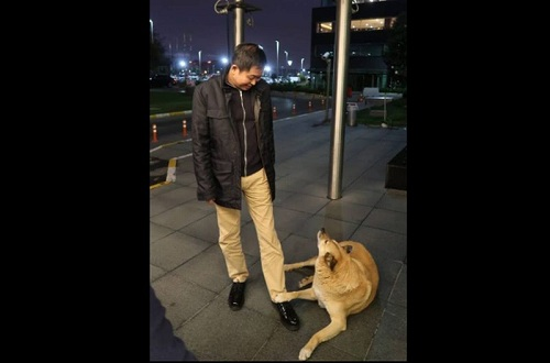 https: img.okeinfo.net content 2018 11 09 320 1975507 menteri-jonan-tiba-tiba-dihampiri-anjing-liar-saat-transit-di-istanbul-Av1AD9yJSo.jpg