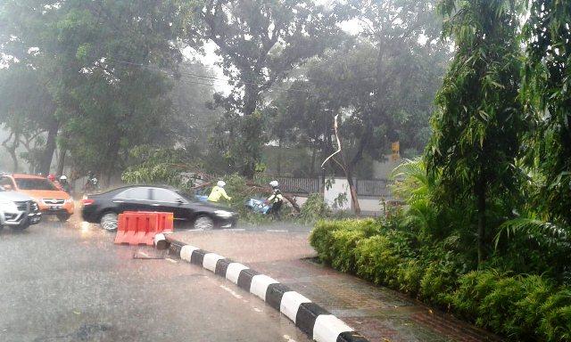 https: img.okeinfo.net content 2018 11 09 338 1975639 diguyur-hujan-pohon-tumbang-timpa-taksi-di-jaksel-Nk5O5CS9gI.jpg