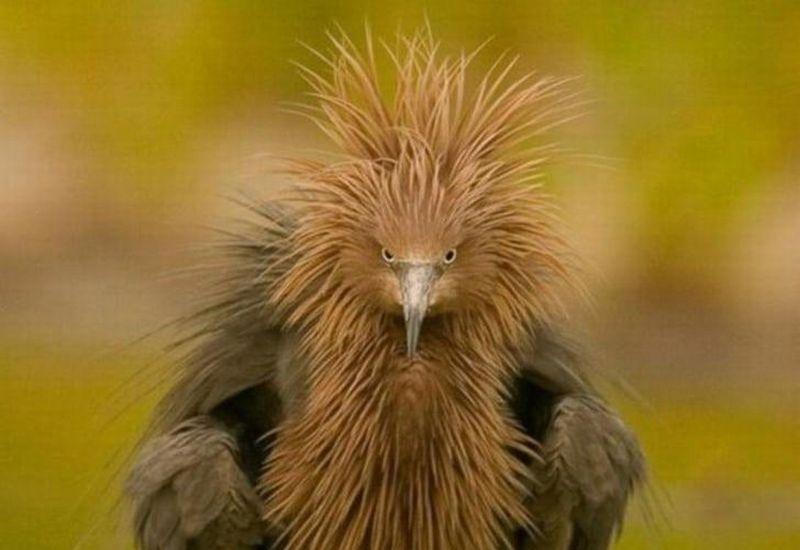 https: img.okeinfo.net content 2018 11 21 194 1980407 10-hewan-ini-tampil-cantik-ala-rihanna-hingga-tupai-harajuku-RRlhcbdkv0.jpg