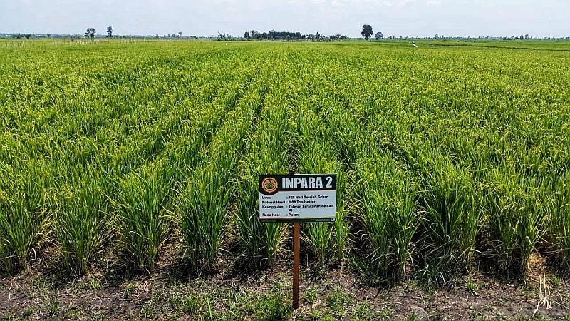 Perbankan Minati Program Sulap Rawa Jadi Lahan Pertanian Okezone