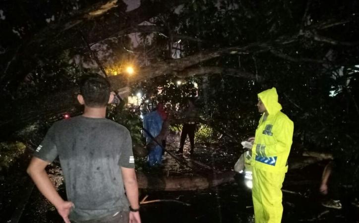 https: img.okeinfo.net content 2018 11 24 338 1982329 pohon-tumbang-di-jalur-puncak-bogor-akibat-hujan-deras-lalin-macet-QZ4zDoweXi.jpg