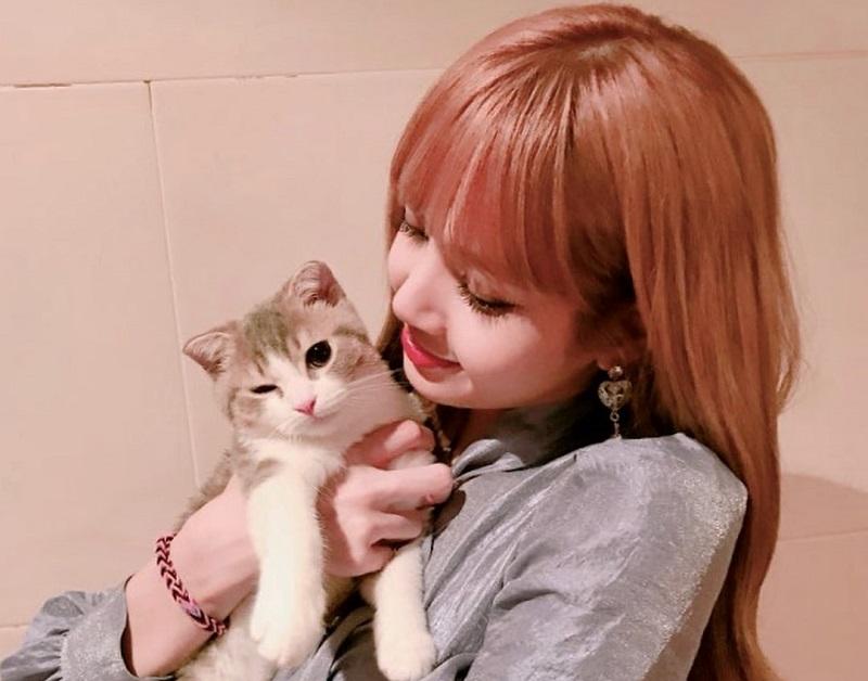 Nama Kucing Betina Lucu Korea 81021 Nama Untuk Kucing Comel Lucu Dan Unik