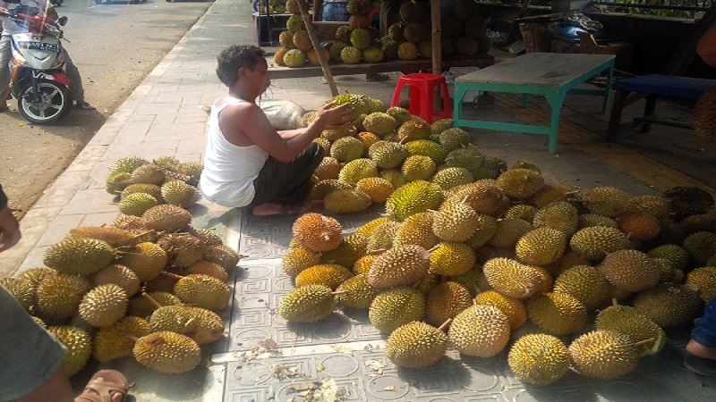 https: img.okeinfo.net content 2018 11 28 320 1984202 china-ketagihan-malaysia-perluas-kebun-durian-YIR4lNJK9i.jpg