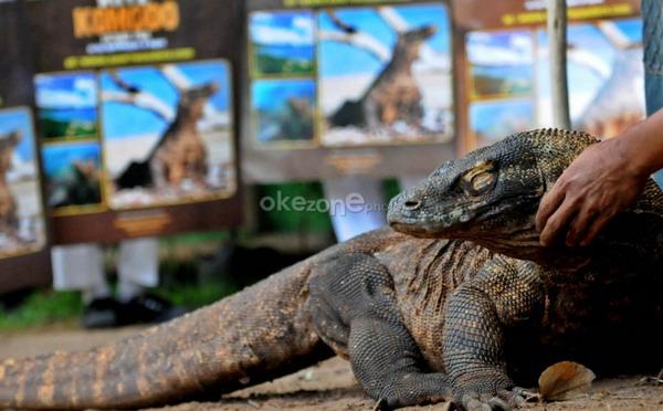 Panorama Savana dan Panorama bawah laut juga menjadi daya tarik yang ada di taman nasional Komodo
