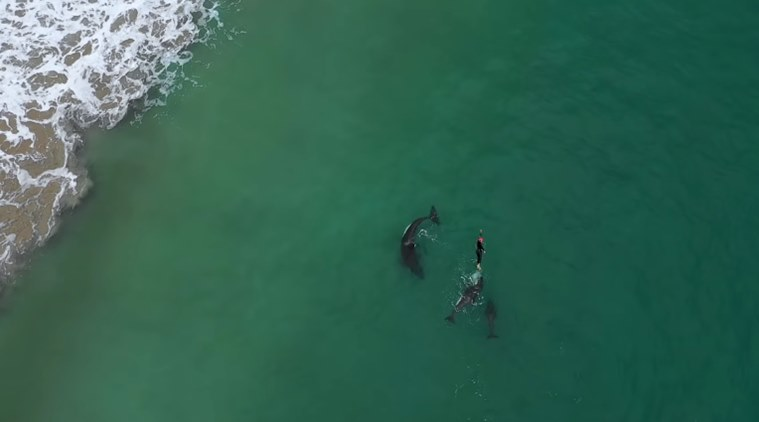 https: img.okeinfo.net content 2018 12 17 406 1992366 viral-video-wanita-asik-berenang-dengan-orca-si-paus-pembunuh-liar-DtH7FUJL1v.jpg