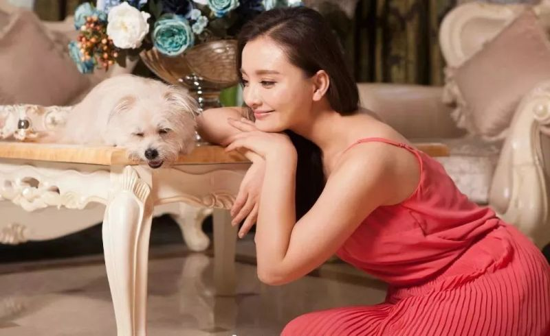 https: img.okeinfo.net content 2018 12 24 481 1995317 anjing-terpopuler-di-china-dikloning-begini-hasilnya-Ga0MZmoacK.jpg