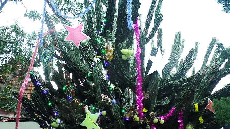 https: img.okeinfo.net content 2018 12 25 406 1995648 romantisme-pohon-natal-kaktus-raksasa-berusia-50-tahun-E1abnlwMrZ.jpg