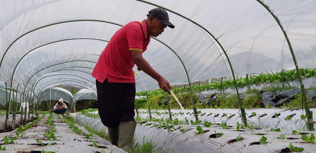 https: img.okeinfo.net content 2019 01 08 320 2001753 digitalisasi-pertanian-mampu-tingkatkan-produksi-hingga-tekan-biaya-pemasaran-kYPvdiR3qj.jpeg