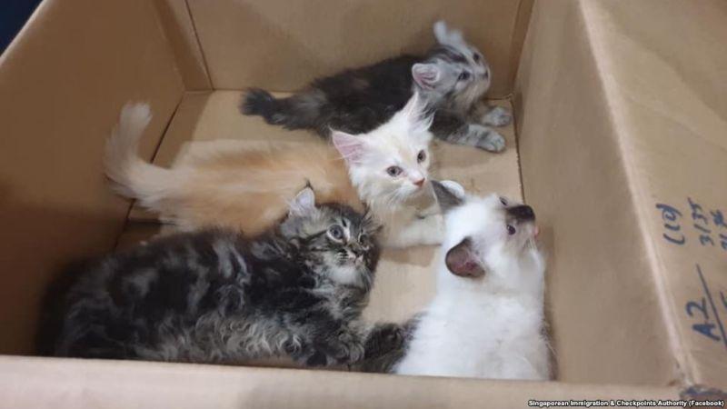 https: img.okeinfo.net content 2019 01 09 18 2001852 selundupkan-anak-kucing-di-celana-pria-ini-terancam-denda-rp100-juta-UvYp2I5aXL.jpg