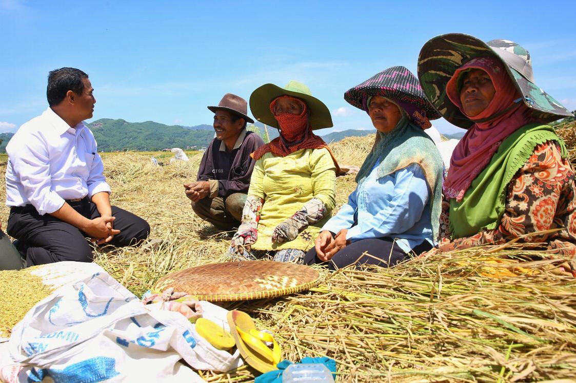 https: img.okeinfo.net content 2019 01 09 320 2001983 pdb-sektor-pertanian-terus-membaik-Qg4ZWWg1MS.jpeg