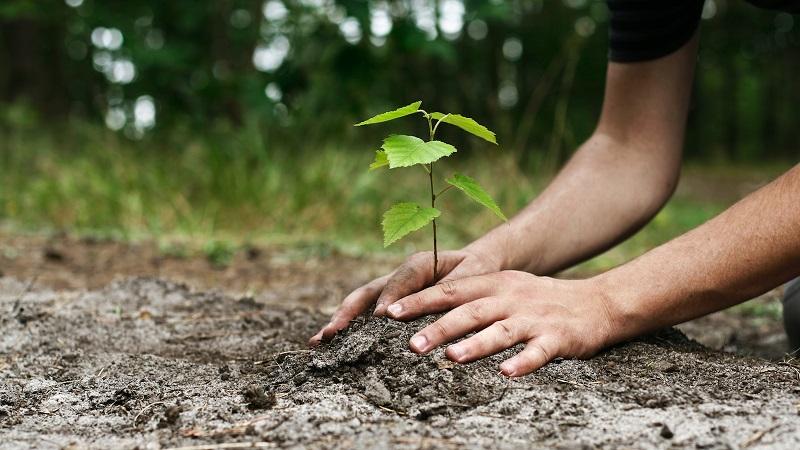 https: img.okeinfo.net content 2019 01 10 196 2002783 hari-sejuta-pohon-generasi-muda-harus-paham-pentingnya-peduli-lingkungan-LoAdxAGbs6.jpg