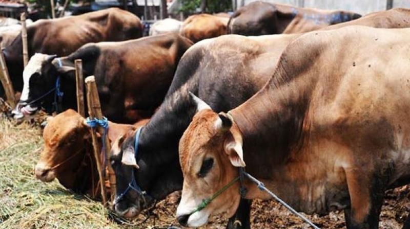 https: img.okeinfo.net content 2019 01 11 18 2002964 menteri-india-berencana-tempatkan-lansia-untuk-hidup-bersama-sapi-di-panti-jompo-FOzdzHB7Ew.jpeg