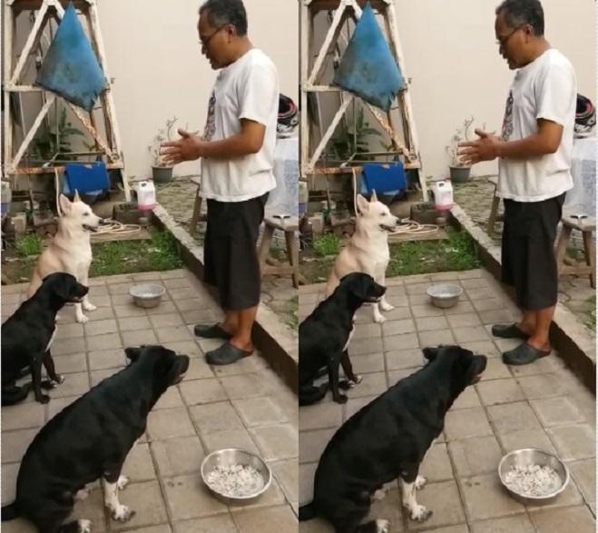 https: img.okeinfo.net content 2019 01 12 196 2003568 anjing-peliharaan-bisa-berdoa-sebelum-makan-bagaimana-cara-melatihnya-6Nd9QmLDcW.jpg