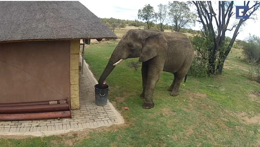 https: img.okeinfo.net content 2019 01 29 196 2010786 gaes-gajah-saja-buang-sampah-di-tempatnya-kalau-kamu-MxAkFOwVgg.jpg