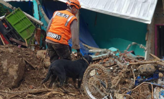 https: img.okeinfo.net content 2019 01 29 609 2010938 anjing-pelacak-temukan-3-jasad-korban-longsor-di-gowa-nh2H3Jj1Ki.JPG
