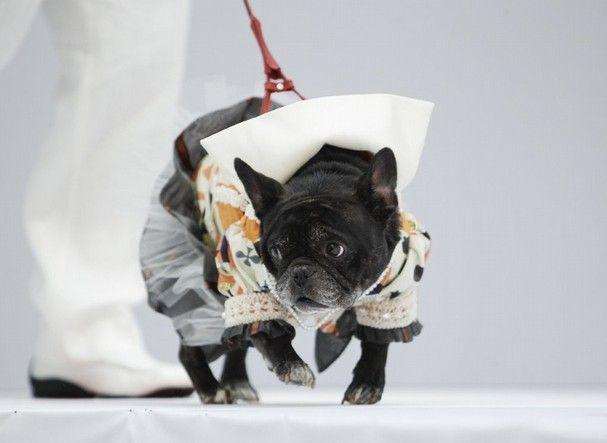 https: img.okeinfo.net content 2019 01 30 194 2011379 nyasar-di-catwalk-fashion-show-anjing-ini-jadi-pusat-perhatian-ojWIJ2lwuy.jpg