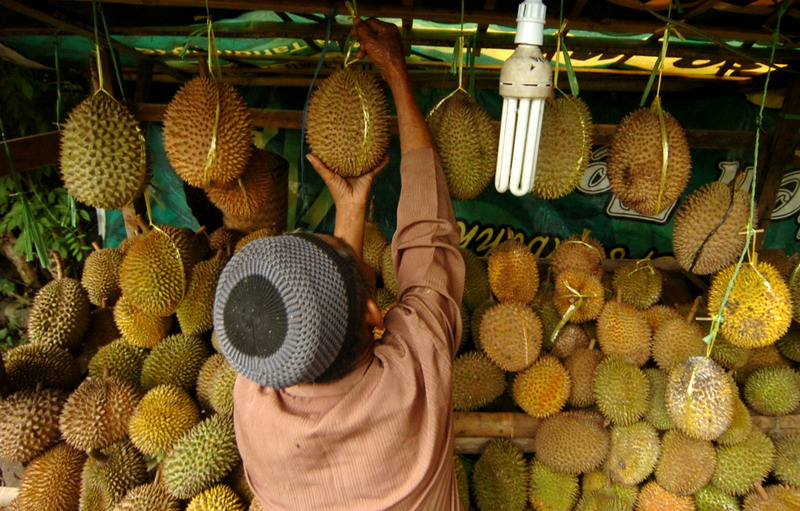 https: img.okeinfo.net content 2019 01 30 481 2011198 3-orang-ini-meregang-nyawa-usai-santap-durian-enak-NYVhDwksaf.jpg