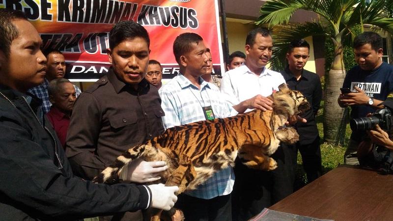 https: img.okeinfo.net content 2019 01 31 340 2011825 jual-kulit-harimau-sumatera-dan-macan-dahan-pria-paruh-baya-ditangkap-polisi-FZ5zj62jw6.jpeg