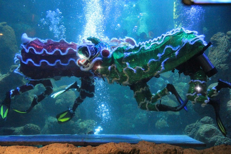 https: img.okeinfo.net content 2019 01 31 406 2012181 jelang-imlek-ancol-hadirkan-3-pertunjukan-barongsai-underwater-ZPDONZAxCh.jfif
