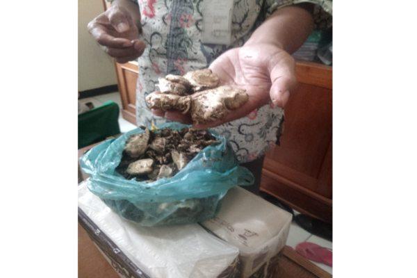 https: img.okeinfo.net content 2019 02 02 512 2012860 satu-keluarga-di-wonogiri-keracunan-jamur-kotoran-sapi-warganet-bisa-halusinasi-0FFaarg1Rw.jpg