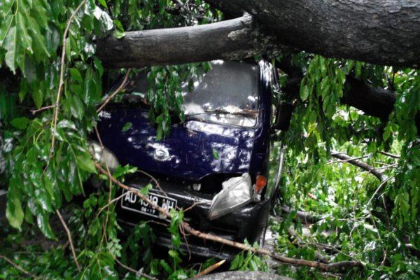 https: img.okeinfo.net content 2019 02 04 512 2013786 pohon-tumbang-timpa-warung-dan-mobil-di-mojosongo-solo-zdtZ4qWzBw.jpg