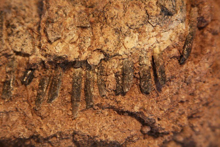 https: img.okeinfo.net content 2019 02 06 56 2014440 ilmuwan-teliti-fosil-dinosaurus-dengan-punggung-mohawk-5trU4IW0qC.jpg