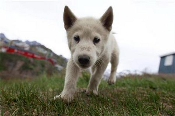 https: img.okeinfo.net content 2019 02 08 18 2015451 dokter-hewan-kolombia-dipenjara-karena-selundupkan-heroin-menggunakan-anak-anjing-hidup-Ms9q5BZkZH.jpg