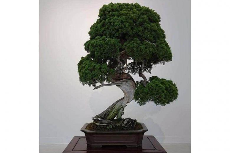 https: img.okeinfo.net content 2019 02 12 18 2016816 bonsai-berusia-400-tahun-dicuri-pemilik-kirim-pesan-untuk-malingnya-yhTfwSpyQn.jpg
