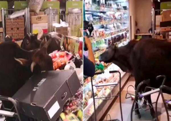 https: img.okeinfo.net content 2019 02 14 18 2017789 supermarket-di-hong-kong-diserbu-kelompok-kerbau-kelaparan-nBPdDkvtrc.jpg