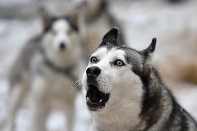 https: img.okeinfo.net content 2019 02 14 18 2017973 sambil-direkam-pria-amerika-perkosa-anjing-dengan-mengenakan-kostum-husky-Bo5UlBitBE.jpg