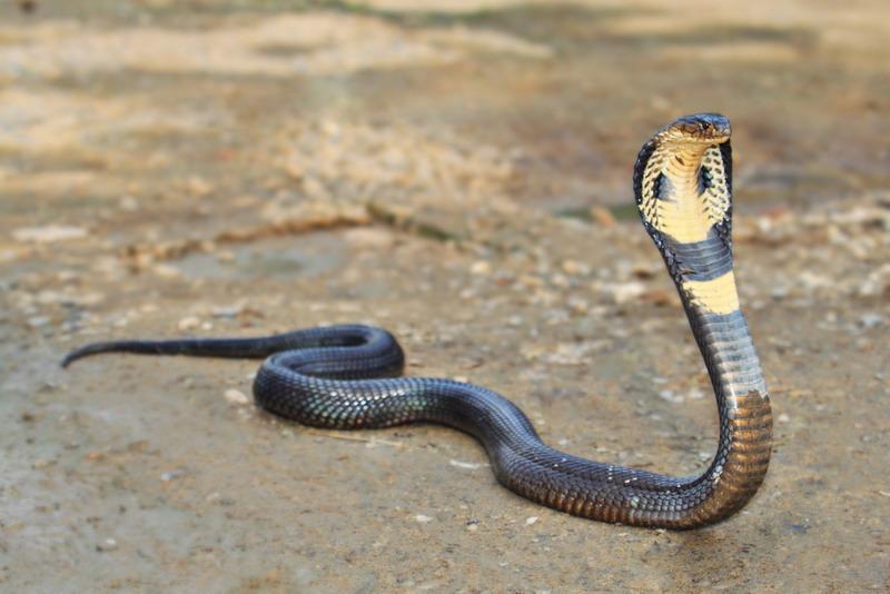 https: img.okeinfo.net content 2019 02 18 340 2019615 warga-digegerkan-dengan-penemuan-ular-kobra-sepanjang-1-meter-di-dalam-mesin-cuci-HPjyoUPFeS.jpg