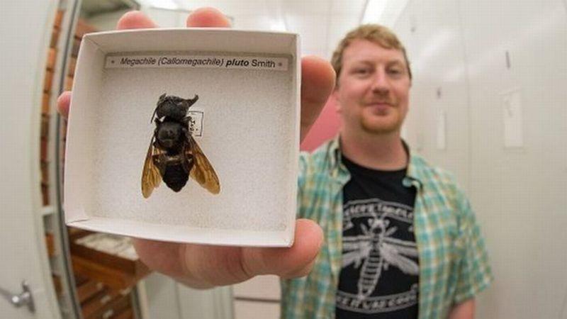https: img.okeinfo.net content 2019 02 22 340 2021339 lebah-terbesar-di-dunia-ditemukan-di-kepulauan-maluku-KvFSUq1yDT.jpg