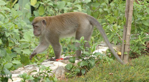 https: img.okeinfo.net content 2019 02 28 608 2023912 warga-tapanuli-selatan-diresahkan-serangan-monyet-yang-masuk-perkampungan-QTbUuWWd3t.jpg