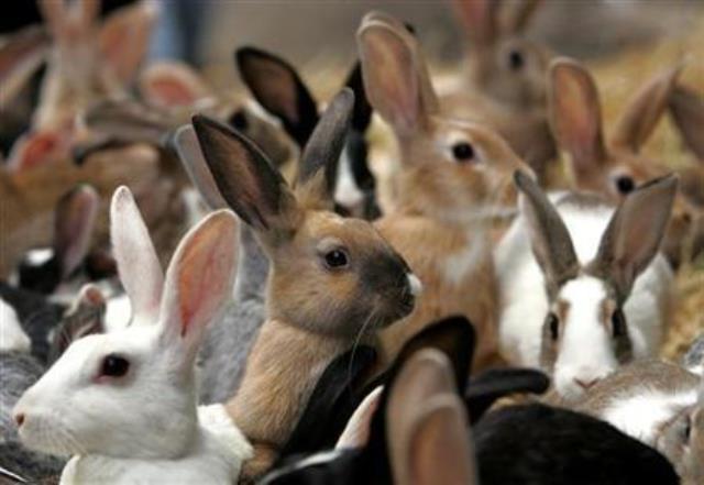 https: img.okeinfo.net content 2019 03 04 18 2025785 kelinci-dijadikan-alat-terapi-untuk-kesehatan-mental-di-nebraska-amerika-serikat-dyMAD9hICD.jpg