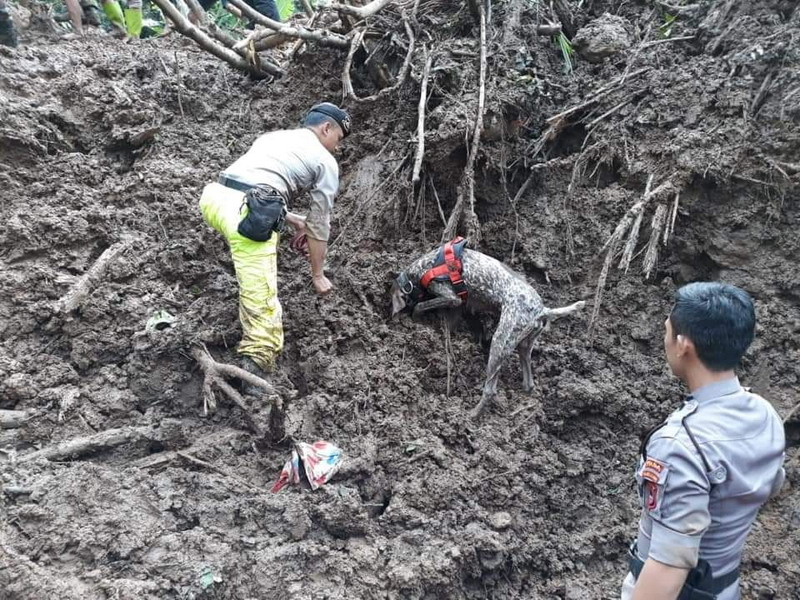 https: img.okeinfo.net content 2019 03 08 340 2027384 korban-longsor-di-labuan-bajo-2-tewas-6-masih-tertimbun-eBorYYgbfB.jpg